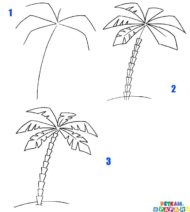 Come Disegnare Una Palma Come Disegnare Gli Alberi Come Disegnare